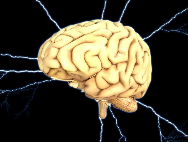 Het effect van stress op je hersenen